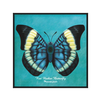 Red Flasher Butterfly Canvas Print