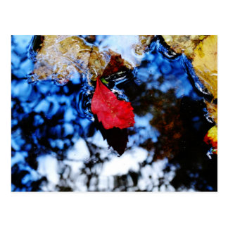 Red floating fall leaf with reflection of blue sky postcard