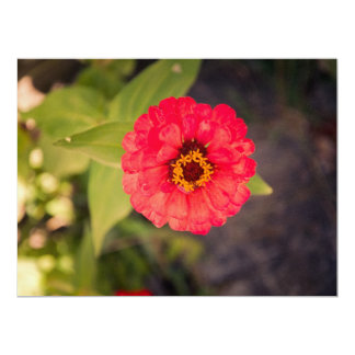 Red flower 6.5x8.75 paper invitation card