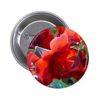 Red Flower Amaryllis Pinback Button