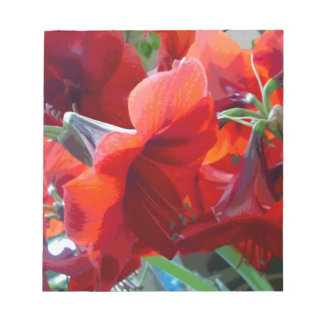 Red Flower Amaryllis Scratch Pad