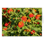 Red Flower Array Greeting Card