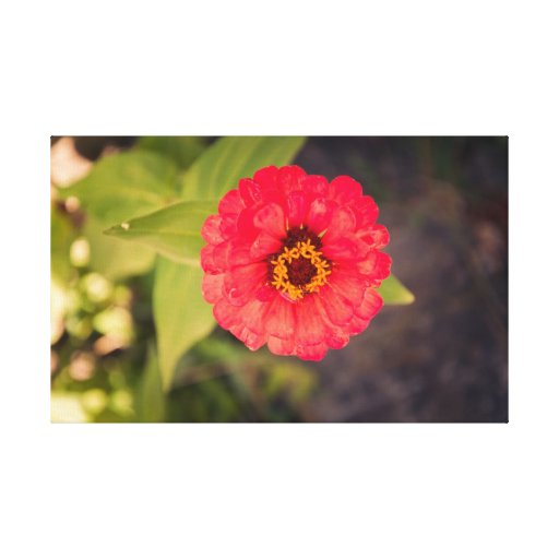 Red flower gallery wrapped canvas