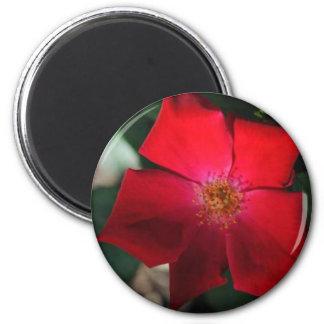 Red Flower / flor rojo Magnets