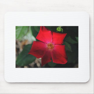 Red Flower / flor rojo Mouse Pad