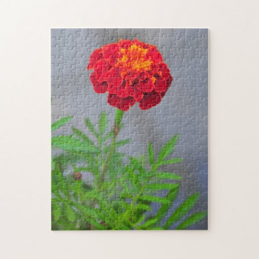 Red flower jigsaw puzzles