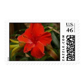 Red Flower Postage
