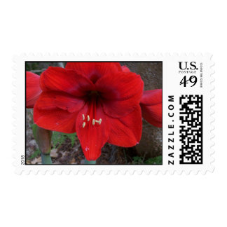 red flower postage