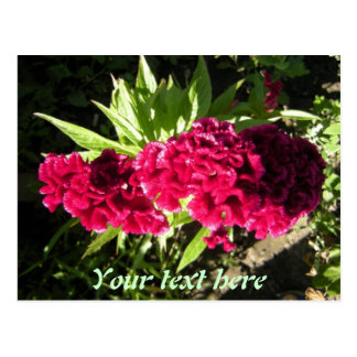 Red Flower Postcard