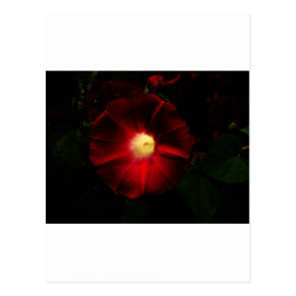 Red Flower Postcard