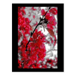 Red Flower Poster - Light Grey Backdrop Post Card