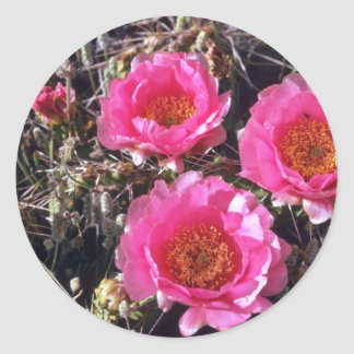 Red-Flower Prickly Pear Cactus flowers Stickers