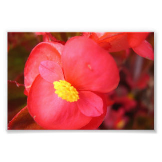 Red Flower Print Art Photo
