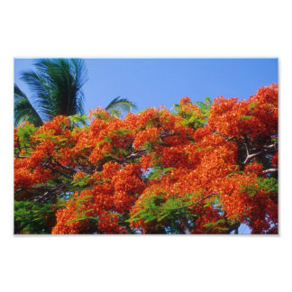 Red flower tropical tree photo print