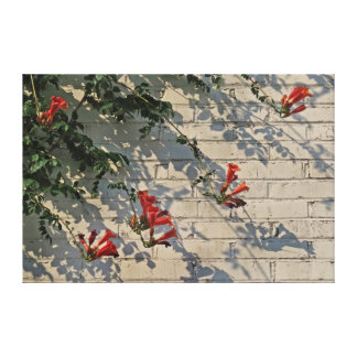 Red Flower, White Wall Canvas Print