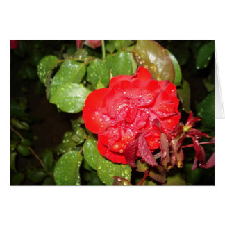 Red Flower with Raindrops Greeting Cards