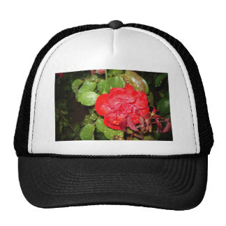 Red Flower with Raindrops Hat