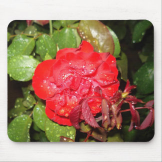 Red Flower with Raindrops Mouse Pad