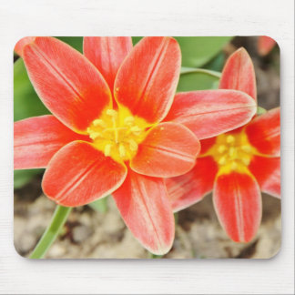 Red Flower with Yellow Center Mouse Pad