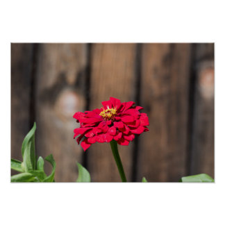 red flower wooden fence poster