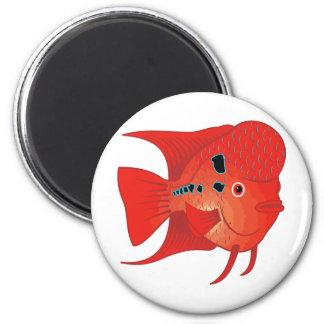 Red Flowerhorn Fish Magnet