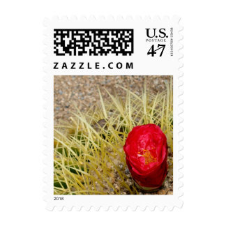 Red Flowering Cactus Small Postage