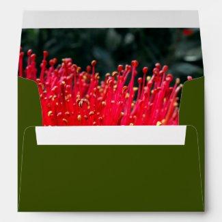 Red Flowering New Zealand Pohutukawa Tree Envelope