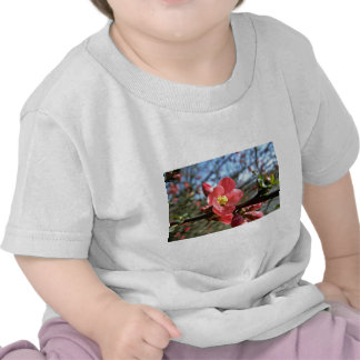 Red Flowering Quince flowers T-shirts