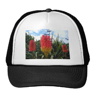 Red flowers against blue sky wit white clouds hat