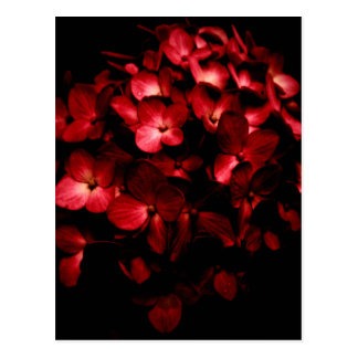 Red Flowers Bouquet in Black Background Photo Postcard