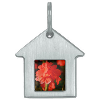 red flowers close up pet tags