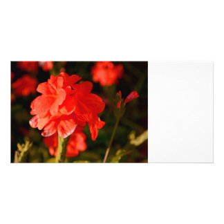 red flowers close up photo cards