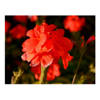red flowers close up postcard