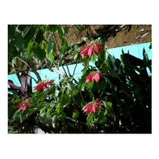 Red Flowers Dominica Postcard