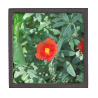 Red Flowers in Greenery - Wonderful Nature Gift Box
