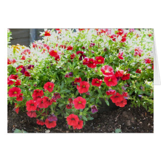 red flowers in the sun greeting card