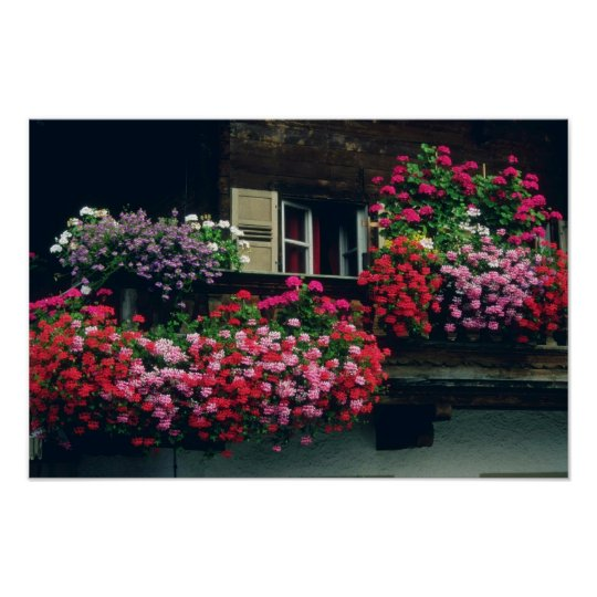 Red Flowers on the balcony flowers Poster