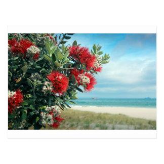 Red flowers paradise beach New Zealand summer Post Card