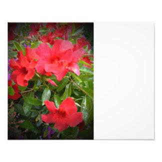 Red Flowers Art Photo