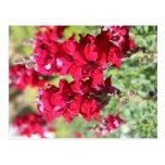 Red flowers postcard
