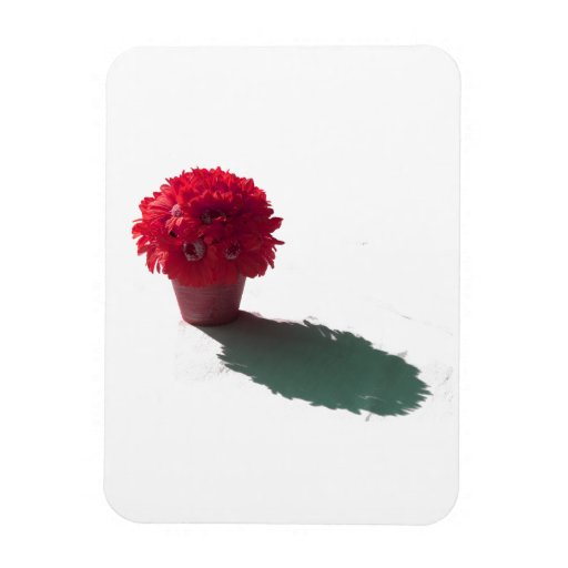 Red Flowers White Bucket and Shadow Rectangular Photo Magnet