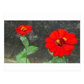 Red Flowers Yellow Flowers Postcard