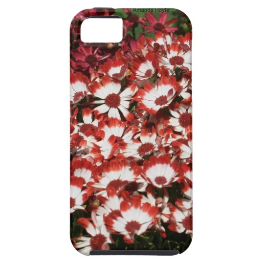 Red Flowerse iPhone 5 Tough Mate Case