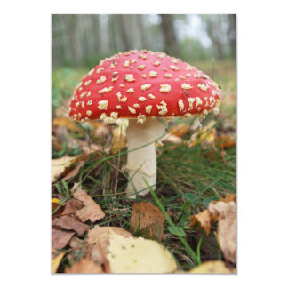 Red Fly Agaric Invitation