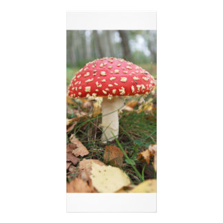 Red Fly Agaric Rack Card