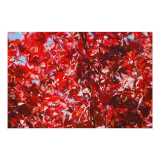 Red Foliage Poster
