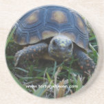 Red-Foot Tortoise Coaster
