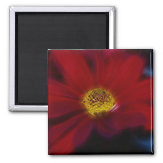 Red For Beauty Refrigerator Magnets
