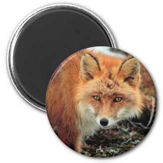 Red Fox at Cape Newenham 2 Inch Round Magnet