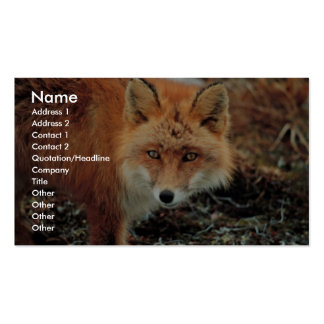 Red Fox at Cape Newenham Double-Sided Standard Business Cards (Pack Of 100)